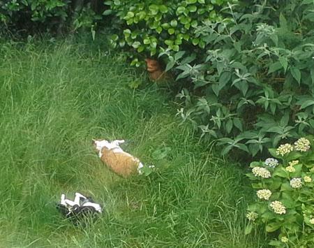 Op lang gras lig je heerlijk!