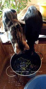 Luna en Milo inspecteren de oogst